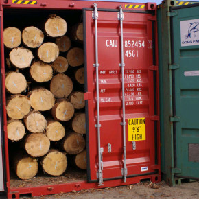 Ukraine to impose export duties on roundwood and wood chips