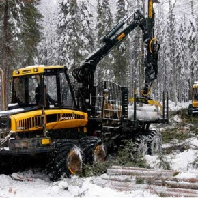 Rent payments for forest resources in Russia may grow since 2015