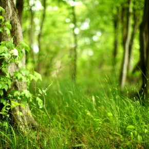 "In Omsk region it summed up the action ""Clean forest''"