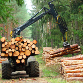 In the Krasnoyarsk region in 2018 harvested a record amount of wood