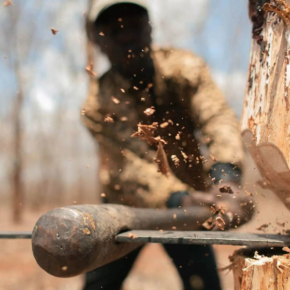 Rosleskhoz: the number of illegal logging in the Sverdlovsk region decreased by 37 %
