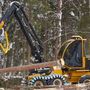 In the Kirov region reduced the size of the Deposit during forest auctions