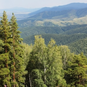 In the Altai region implemented the initiative of Ivan Valentik for a moratorium on logging in pine forests