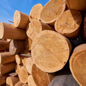In the East Kazakhstan region it will increase the export of wood