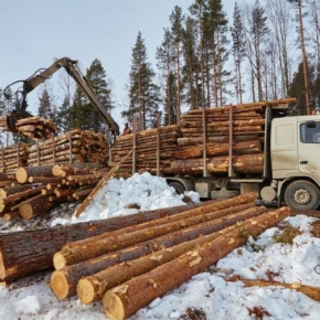 In 2018, the volume of timber trading on the St. Petersburg international commodity exchange (SPIMEX) amounted to almost 1.4 million cubic meters