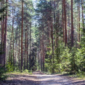 WhatWood consultants made a report at the roundtable in Kirov on the prospects of development of the forest industry in Russia and the Kirov region