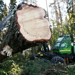 By 2030, Udmurtia will become a center of deep processing of wood, by this time the volume of sales of unprocessed timber is planned to reduce by more than 90%