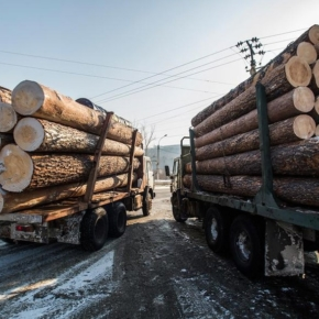 "The head of Rosleskhoz Ivan Valentik: ""Organized exchange trade will make the market of forest products more transparent, and exchange indicators of the price of wood reliable"""