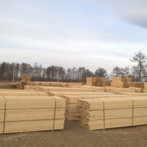 In the Far East, the resident of the free port has launched a new wood processing production
