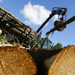 By 2025, the gross output of the forest industry in China will increase by 50 %