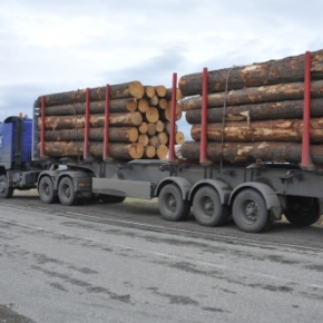 "The operation ""Timber truck"": Forest inspectors of the Republic of Khakassia, together with employees of law enforcement agencies patrolling the route"