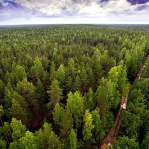 In Rosleskhoz it created a Council for investment activities in the field of forest development