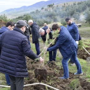 In Dagestan, it will spend 3 million rubles on reforestation