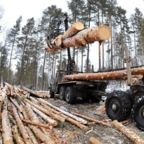 Tomsk oblast has stopped cooperation with a Chinese tenant of the forest