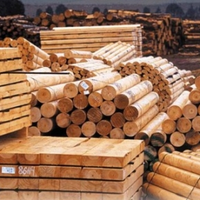 In January-February 2019, the number of forest products transactions on the Belarusian universal commodity exchange increased by 63 %
