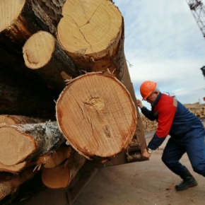 In 2018, exports of forest products from Finland increased by 5%, and imports – by 34%