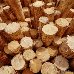 For 1Q 2019, the Vologda region shipped products of the forest complex in the amount of 13.9 billion rubles