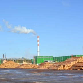In the Pestovskiy timber industry complex it will launch a line for the cutting of thick timber