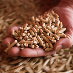 The plant for the production of torrefied pellets will be built in the Novgorod region