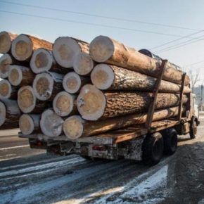 The Government increased export duties on unprocessed soft timber of Far Eastern species