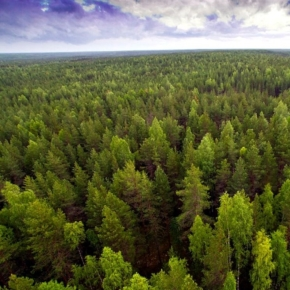 The statistical area of forest plots in Russia has decreased by 124 million hectares after correcting statistical data with the adoption of the law on eliminating contradictions in state registers