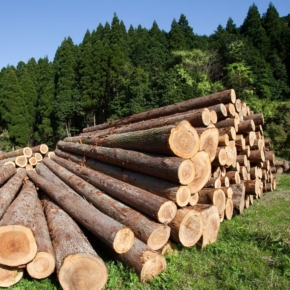 Russia: the strongest decline in exports of logs since 2008 continues