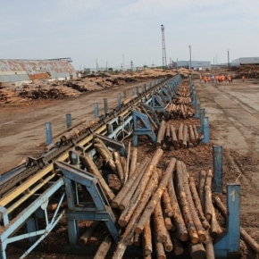 The auction to sell Ugra Timber Holding is scheduled for March 20, 2020, the initial price is 3.1 billion rubles