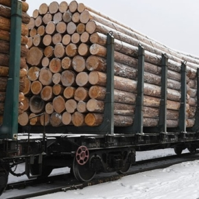 Exports of roundwood from the Far East fell by 27.4% in January-February 2020