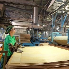 Sveza may suspend plywood production