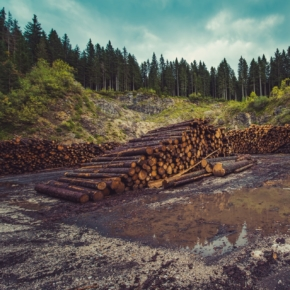The situation on the forest products market in 2019 - 1Q 2020 in Russia and the world