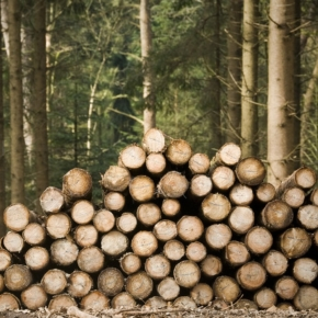 Whether to introduce private ownership of the forest