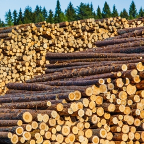 Deficit in raw materials for pulp and paper production