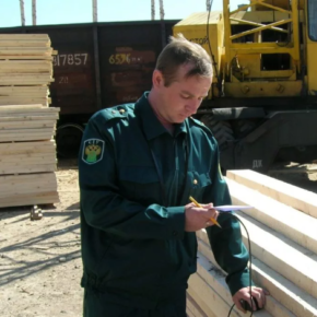Should the Russian government introduce export duties on sawn timber?