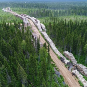 """The Ministry of Natural Resources of Russia and the Federal Forestry Agency have prepared a draft """"Development Strategy for the Forestry Complex of the Russian Federation until 2030"""""""