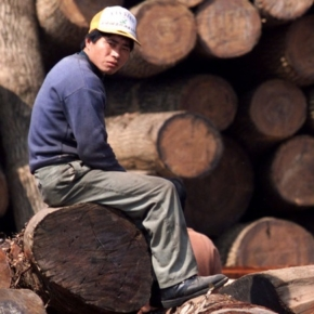 WRI: The Coronavirus has not stopped the global trade of forest products