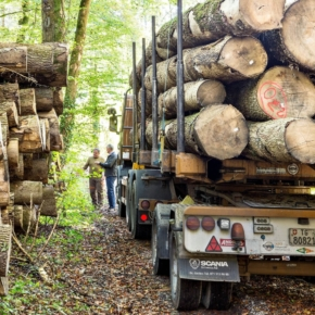 Switzerland is working on a new timber trade regulation