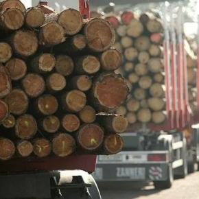 Chinese imports of logs drop sharply in 1H 2020