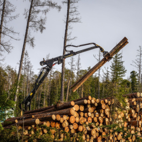 Russian Federal Forestry Agency reports about lower timber harvesting level