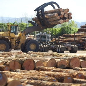 Rebound in UK tropical wood imports continued in September but prospects less certain