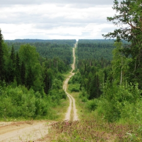 Pinezhsky Timber Holding is going to build a new main haul road in the Arkhangelsk Region