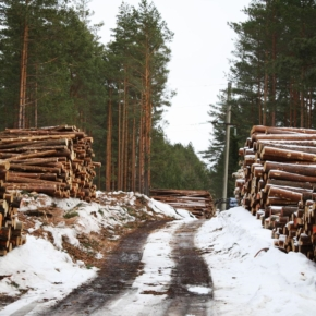 Rates of payment for forest use to be increased by 4% in 2021