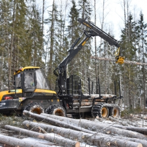 Sveza has increased its forest lease by more than a third in 2020