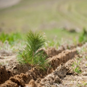Canadian government to plant two billion trees
