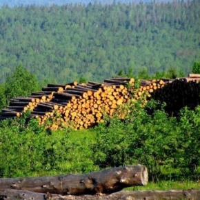 The Government approved the RF Forest Sector Development Strategy until 2030