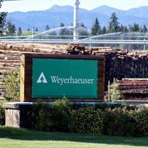 Greif sells 28,000 ha of timberlands to Weyerhaeuser