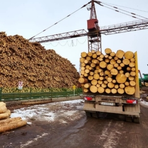 Russia increased its roundwood exports by 30.1% In January 2021