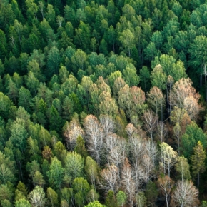 A new procedure for maintaining the state forest register established in Russia