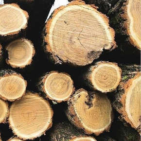 Sweden: Decrease in roundwood prices 2020