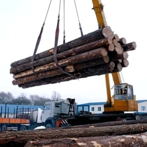 Russian government introduced a de facto ban on the export of unprocessed softwood logs from January 1, 2022