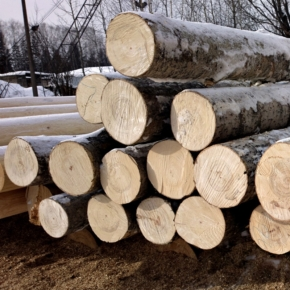 Chinese hardwood log imports fell 17% in 2020